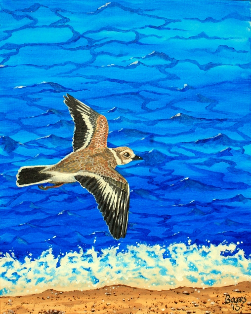 Plover - (sold) - ©JBowers